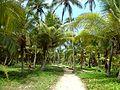 114 Tayrona Palm Trees Colombia.JPG