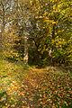 15-11-01-Kaninchenwerder-RalfR-WMA 3290.jpg