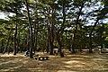 171125 Futatabi Park Kobe Japan13s3.jpg