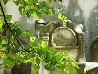 1734 cmentarz żydowski Ostrowiec Świętokrzyski 8.JPG