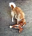 1971-3 Portugal Dog and Bone Faro Market (50878575597).jpg
