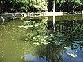 2.Біосферний заповідник«Асканія-Нова» ім. Ф. Е. Фальц-Фейна.Дендропарк.Озеро (2).jpg