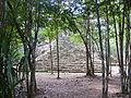 2010. Cobá. Quintana Roo. México.-2.jpg