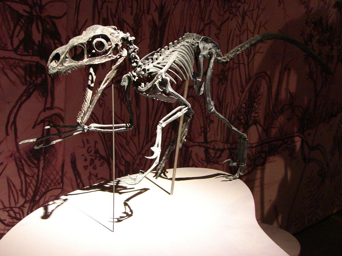 raptor � wikip233dia