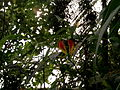2012 kveten botanicka zahrada 080.jpg