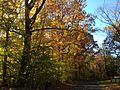 2014-11-02 14 21 36 View west along a wooded portion of Woosamonsa Road during autumn in Hopewell Township, New Jersey.jpg