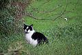 20141102- Black and White Cat by sebaso 01.jpg