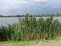 2015-05-21 Mantova, fiume Mincio 25.jpg