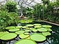 2018-06-18-bonn-meckenheimer-allee-169-botanischer-garten-victoriahaus-08.jpg