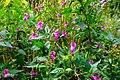 2019-09-28 Hike Stinderbachtal. Reader-43.jpg