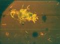 30 puccinia tirolensis zwetko 13.10.jpg