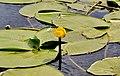 4 Флора і фауна Русанівської протоки.jpg