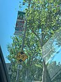 5 De Mayo Community Parade & Fiesta Pole Banner in Corona CA.jpeg