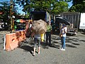 689Baliuag enhanced community quarantine 03.jpg