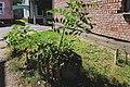 73-205-5021 пень коркового дерева.jpg