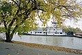 A4j021 9mp Linda Little, mulberry tree (6371670743).jpg