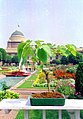 A Bonsai plant in the backdrop of Rashtrapati Bhawan in New Delhi on March 14, 2005.jpg