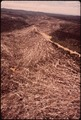 A LARGE AREA OF SLASH REMAINS AFTER LOGGING OPERATIONS (BY THE U.S. BUREAU OF INDIAN AFFAIRS) ON THE QUINAULT INDIAN... - NARA - 545138.tif