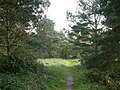 A footpath through the trees - geograph.org.uk - 64503.jpg