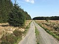 A forestry road - geograph.org.uk - 799541.jpg