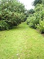 A verdant churchyard at St Luke's, Ironbridge - geograph.org.uk - 1463319.jpg