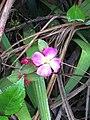 A vibrant flower captured at Horton Plains National Park.jpg