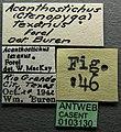 Acanthostichus texanus casent0103130 label 1.jpg