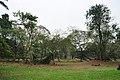 Acharya Jagadish Chandra Bose Indian Botanic Garden - Howrah 2011-02-20 1656.JPG