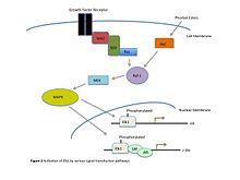 ternary transcription activation complex