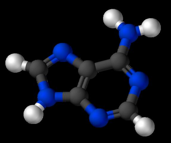 An adenine molecule also has some nitrogen atoms (blue). It is not living.