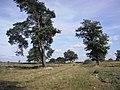 Aekingerzand - 2009 - panoramio.jpg