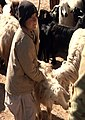 Afghan boy assists in livestock vaccinations 130209-A-IX958-099.jpg