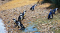 African penguins (21).jpg