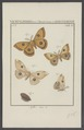 Aglia - Print - Iconographia Zoologica - Special Collections University of Amsterdam - UBAINV0274 003 05 0039.tif