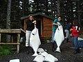 Alaska 2007 071.jpg