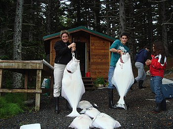 English: Halibut caught off Raspberry Island, ...
