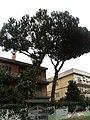 Alberi.... - panoramio (5).jpg
