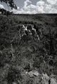 Almecegas I Cachoeira em Branco e Preto.png