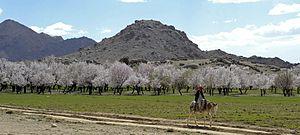 Zabul Province - Almond trees in Zabul Province
