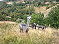 Alpaca a Ceredolo dei Coppi.jpg