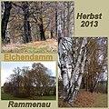 Alter Eichendamm an der Waldscheibe in Rammenau.jpg