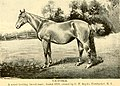 American horses and horse breeding - a complete history of the horse from the remotest period in his history to date. The horseman's encyclopedia and standard authority on horses, embracing breeds, (14598307278).jpg