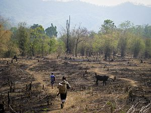 An example of slash and burn agriculture practice Thailand.jpg