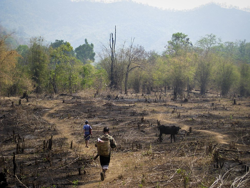 An example of slash and burn agriculture practice Thailand