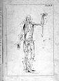 Anatomia esterna del corpo umano, title page. Wellcome L0023848.jpg