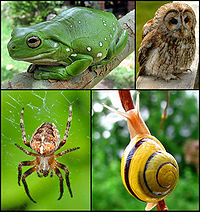 Animal diversity October 2007 for thumbnail.jpg