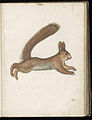 Animal drawings collected by Felix Platter, p2 - (121).jpg