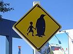 Antarctic Centre - 2076316482.jpg