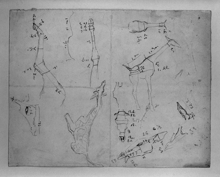 File:Antoine-Louis Barye - Measured Drawing of Giraffe - Walters 372222.jpg