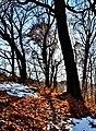 Appalachian Trees - panoramio.jpg
